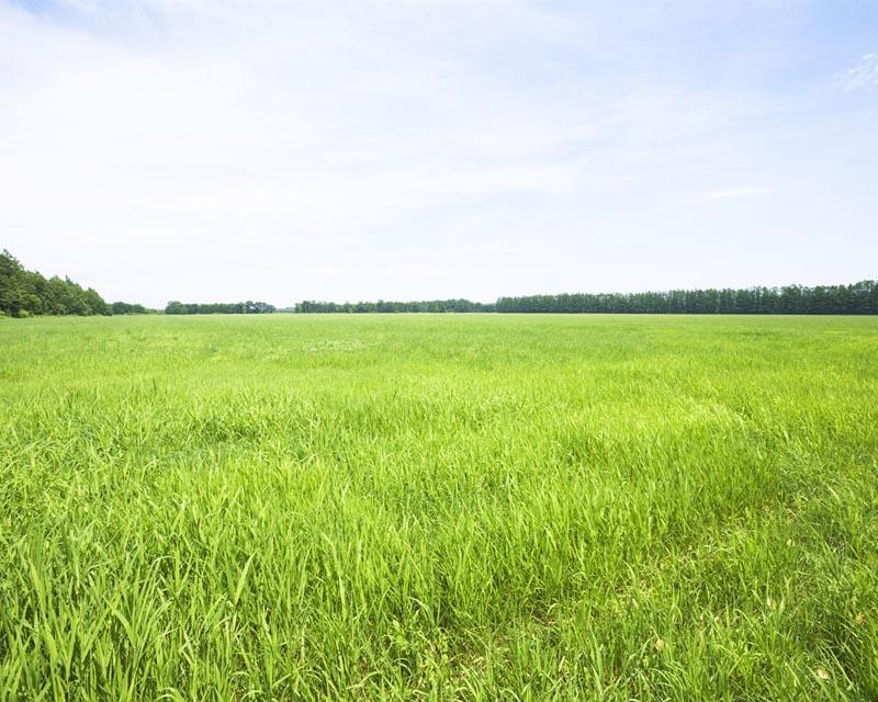 Продажа земли сельхозназначения в Тверской области